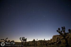 Under the Milky Way (Joshua Tree)